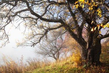 Autumn tree and fog