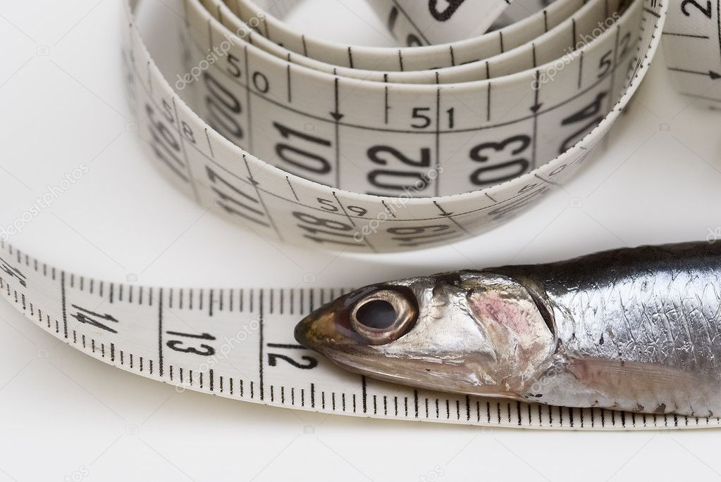 Measuring anchovies.