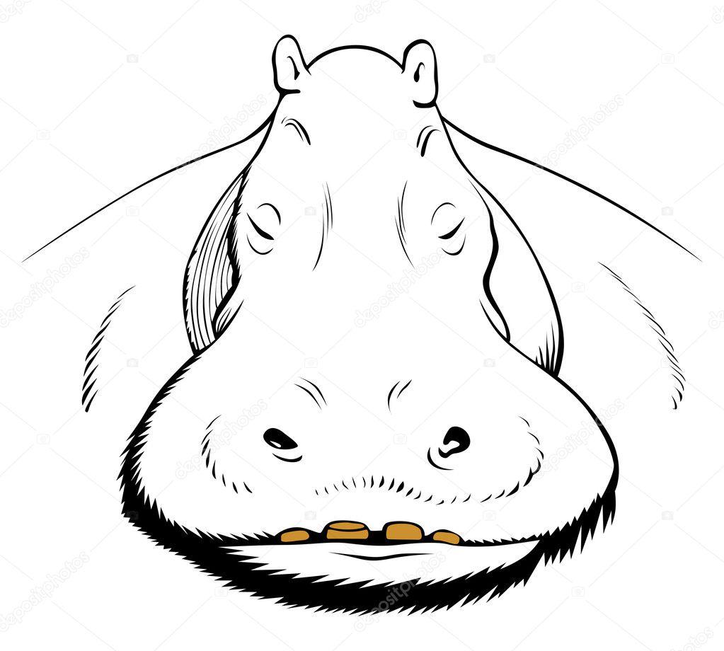 cara de hipopótamo — Vector de stock © e.kataev #5576027