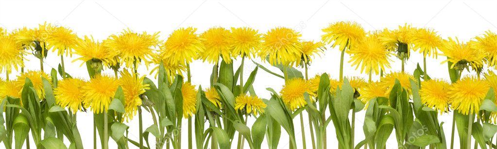 Real spring flowers border stock photo vilaxlt 6366816 real spring flowers border stock photo mightylinksfo