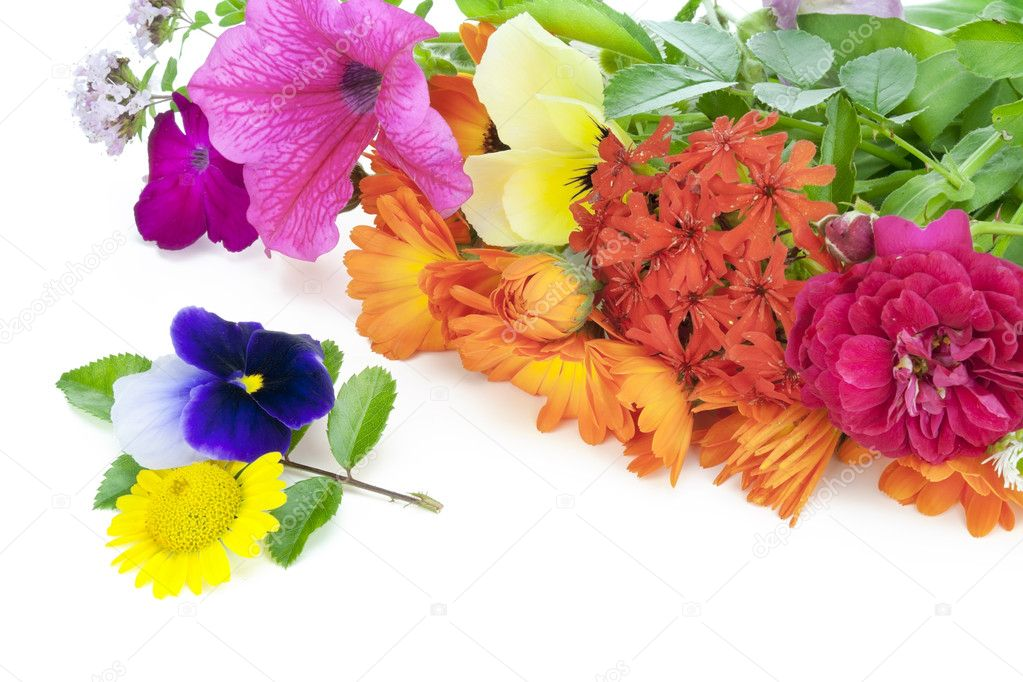 Fleurs De Juilletu2013 Images De Stock Libres De Droits