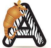 Fotografie Alphabet A with Armadillo cartoon