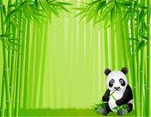 Fotografia foresta di bambù e Panda