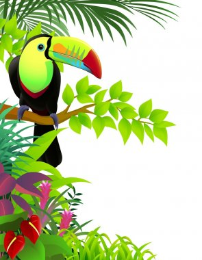 Vector illustration of toucan in the tropical jungle