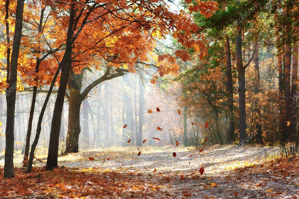 Фотообои Fall in the park