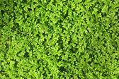 zelené listy pozadí