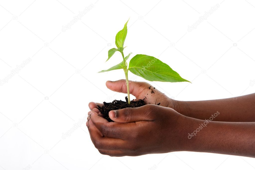 Plant in child hands