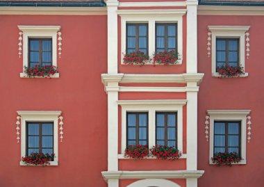 Red flowers in window