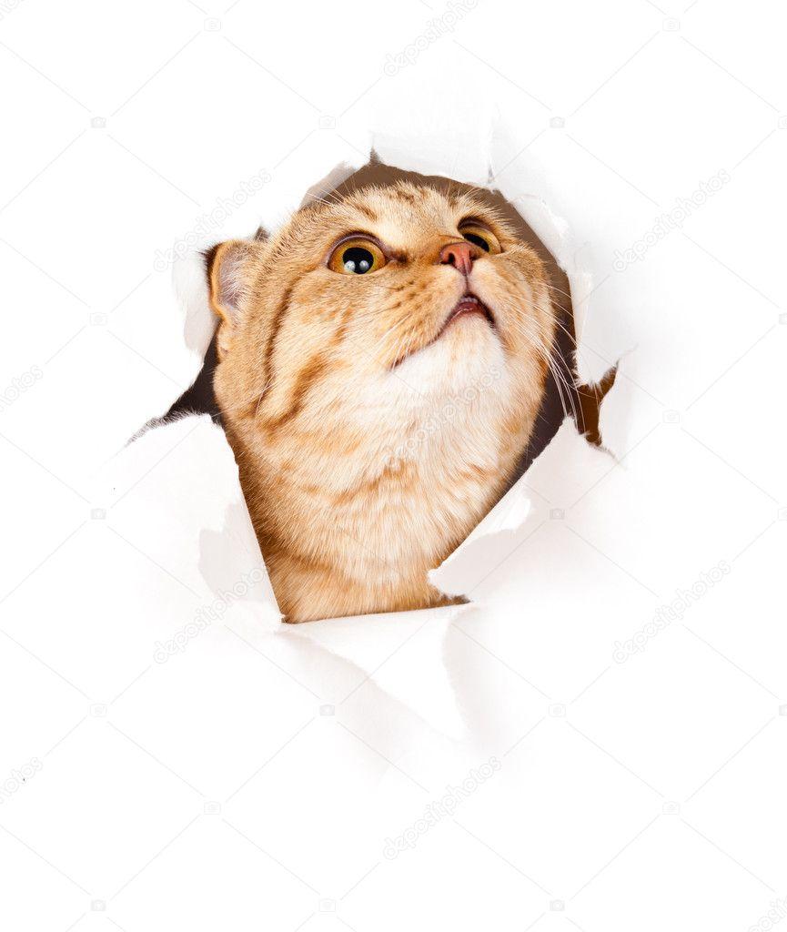 sladké zralé kočička fotky