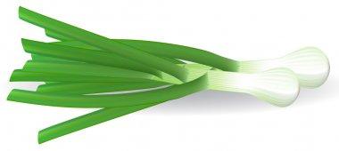 Fresh green onions. Vector illustration.