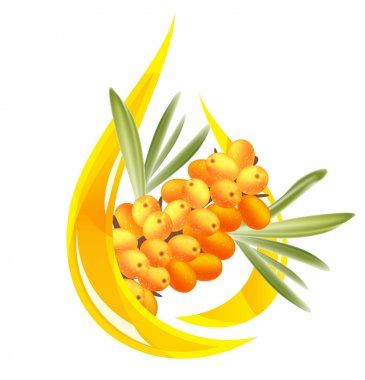 Sea buckthorn oil. Stylized drop of oil and a branch with berrie