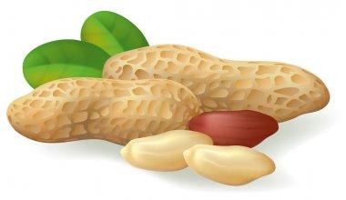 Peanut fruit and leaves.