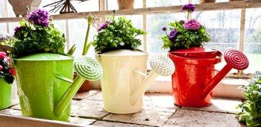 Garden - Watering can
