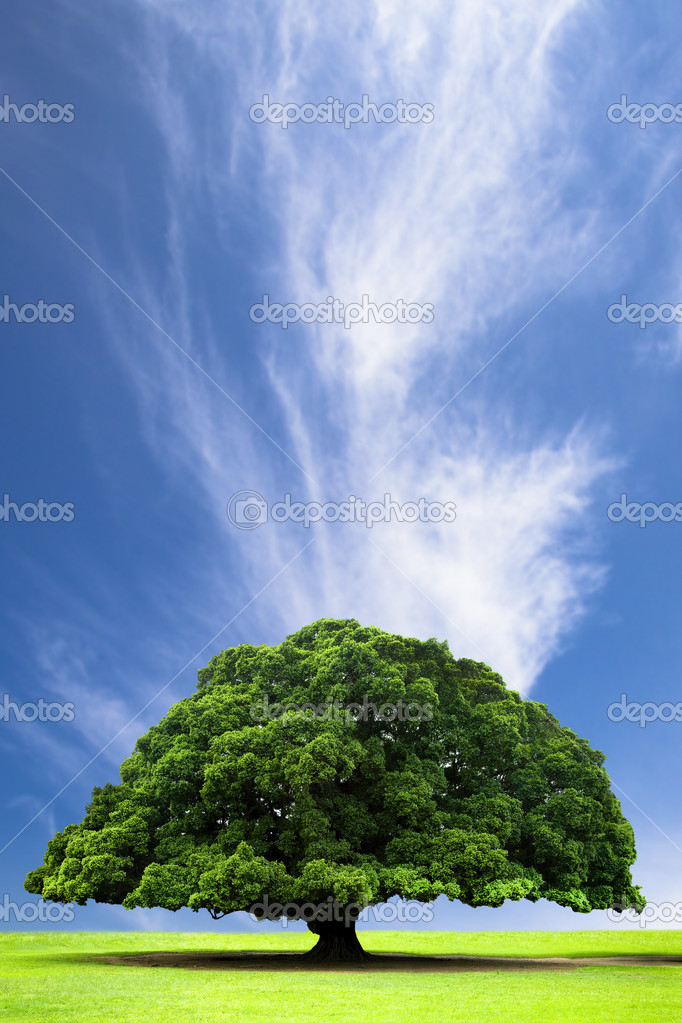 Spring and summer landscape with old tree on the hill and cloud
