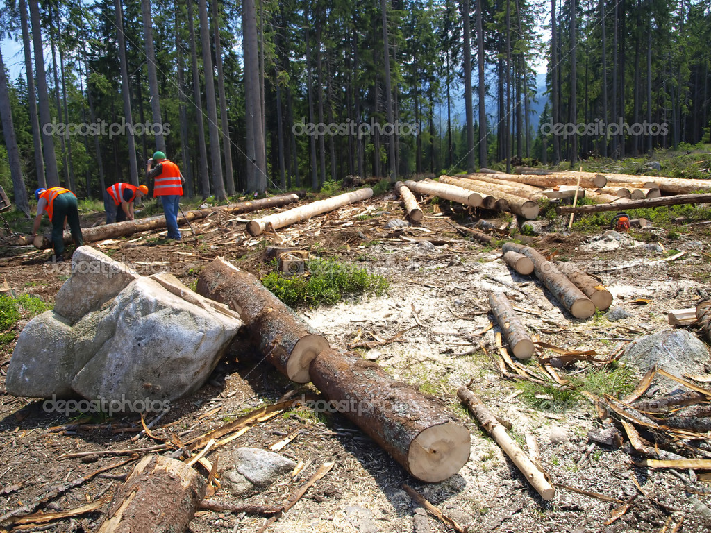 Work on the cutting of trees