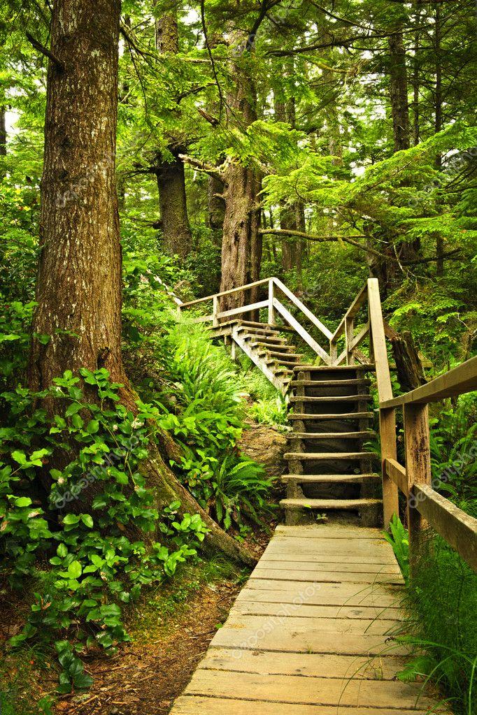 Фотообои Путь в умеренных тропических лесов