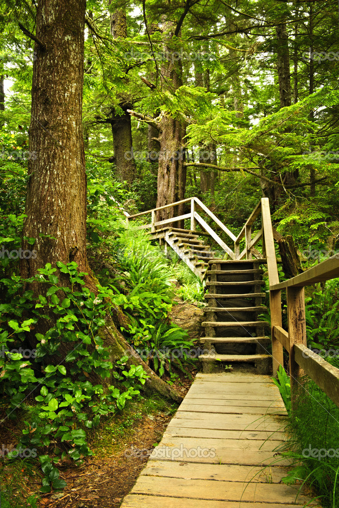 Фотообои Path in temperate rainforest