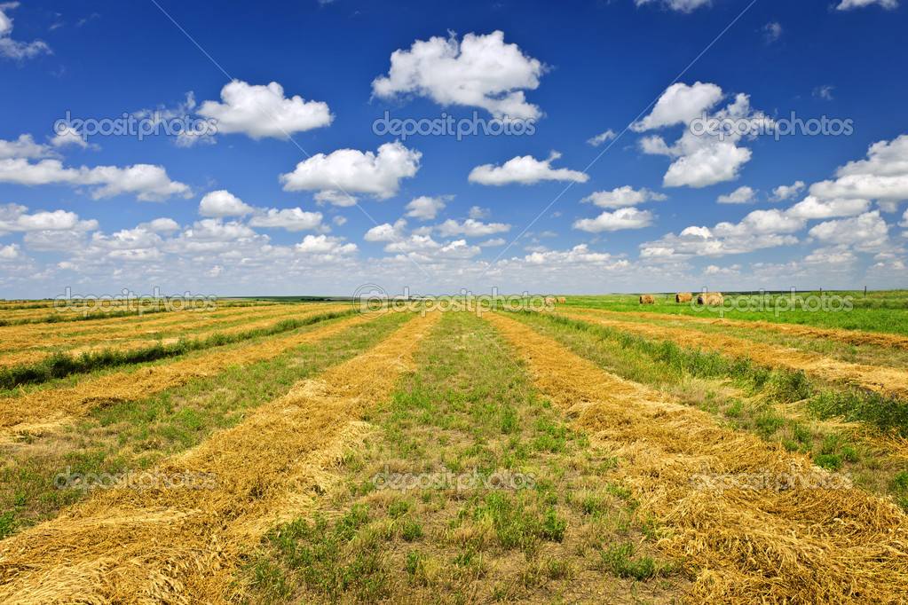 Campo di grano fattoria al raccolto foto stock for Piani di fattoria di 2000 piedi quadrati