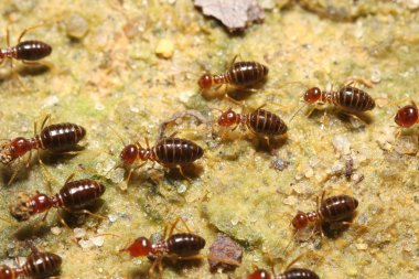 Termite group go back