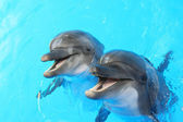 Photo Dolphins swim in the pool