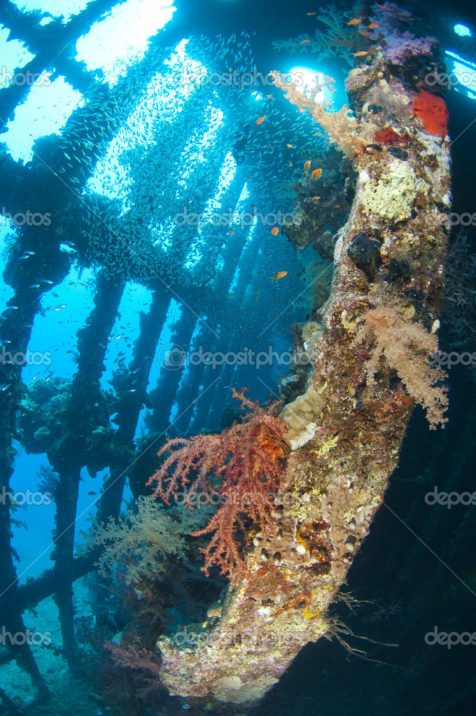 Soft corals and glassfish inside a large shipwreck