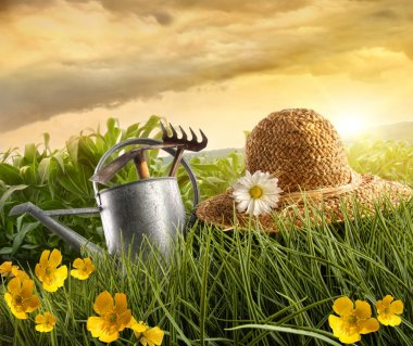 Water can and straw hat laying in field of corn