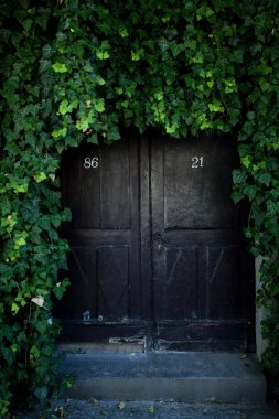 Door covered with ivy