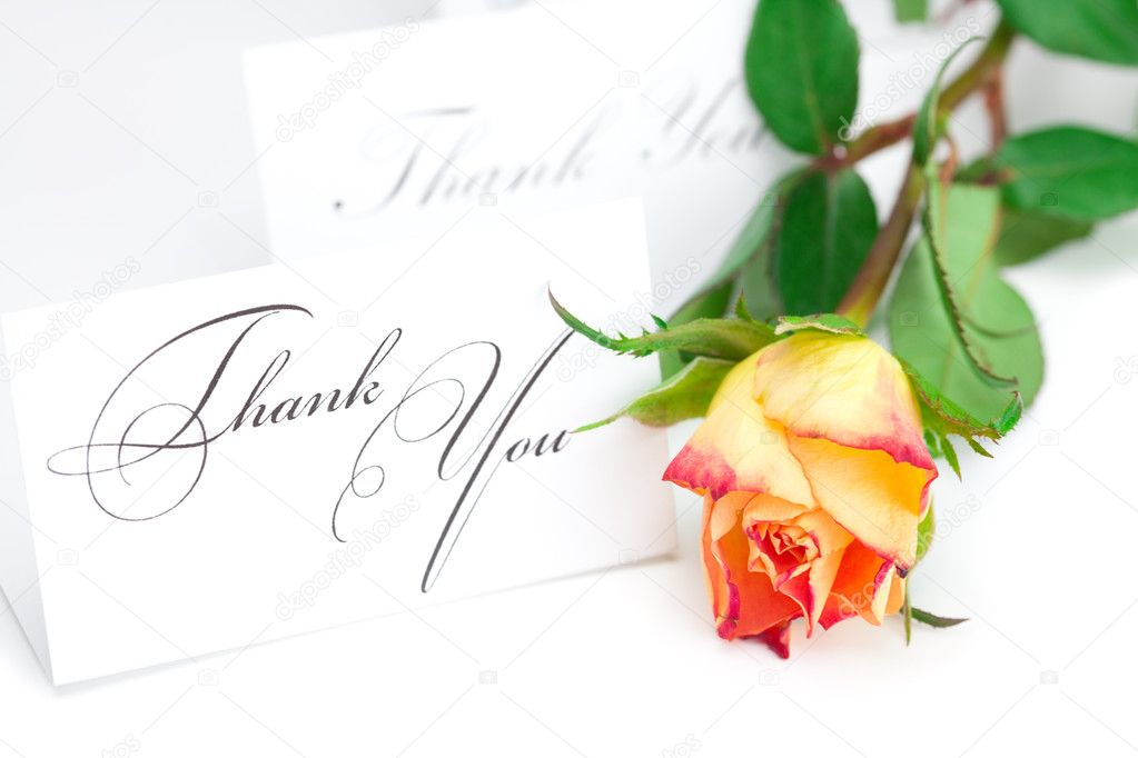 Yellow red rose and a card with the words thank you isolated on