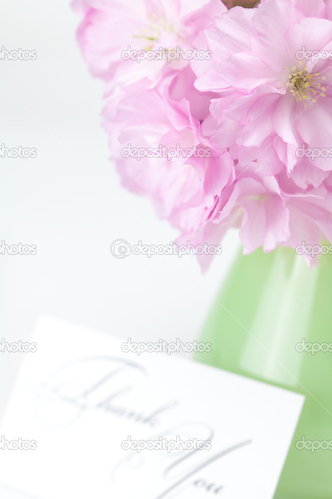 Sakura flower in a vase and a card signed thank you isolated on