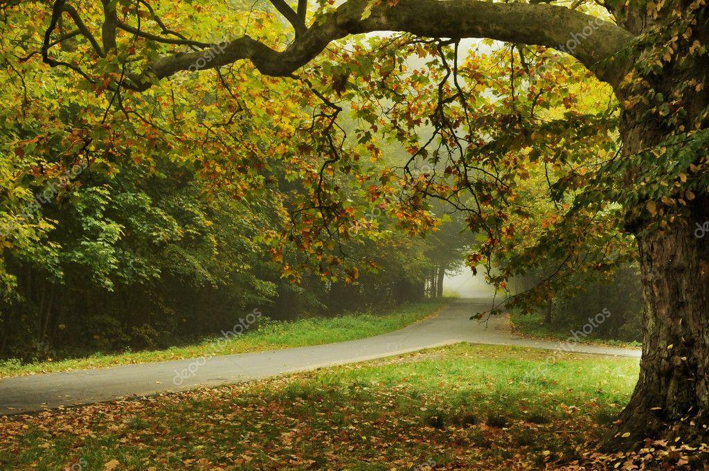 Autumn type landscape