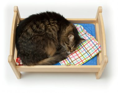 Toy cradle and a cat