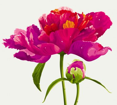 Luxurious red peony flower and the bud painted in bright colors clip art vector