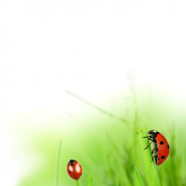 Spring green grass with ladybugs