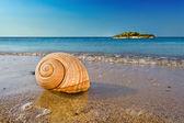 Fotografie mušle na klidné středomořské pláži