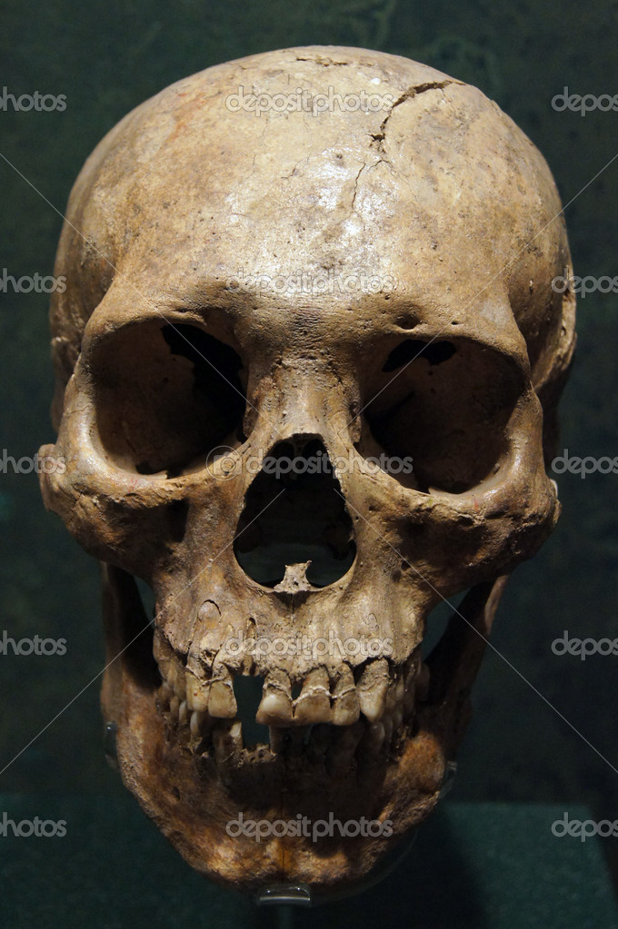 human skull — stock photo © shanin #5897191, Human Body