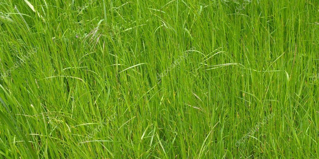 Цветущий луг трава пустырника 20 шт. фильтр-пакет купить по ... | 512x1024