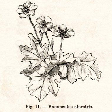 Vintage flowers illustrations