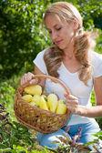 Mladá žena držící zeleniny v zahradě