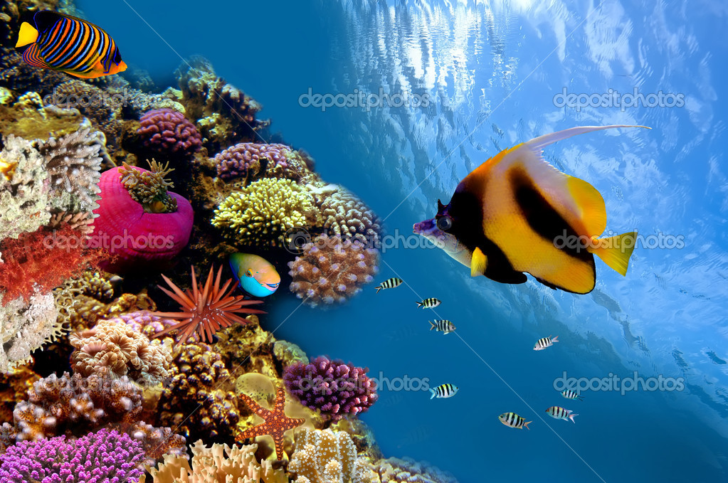 Фотообои Photo of a coral colony on a reef top, Red Sea, Egypt
