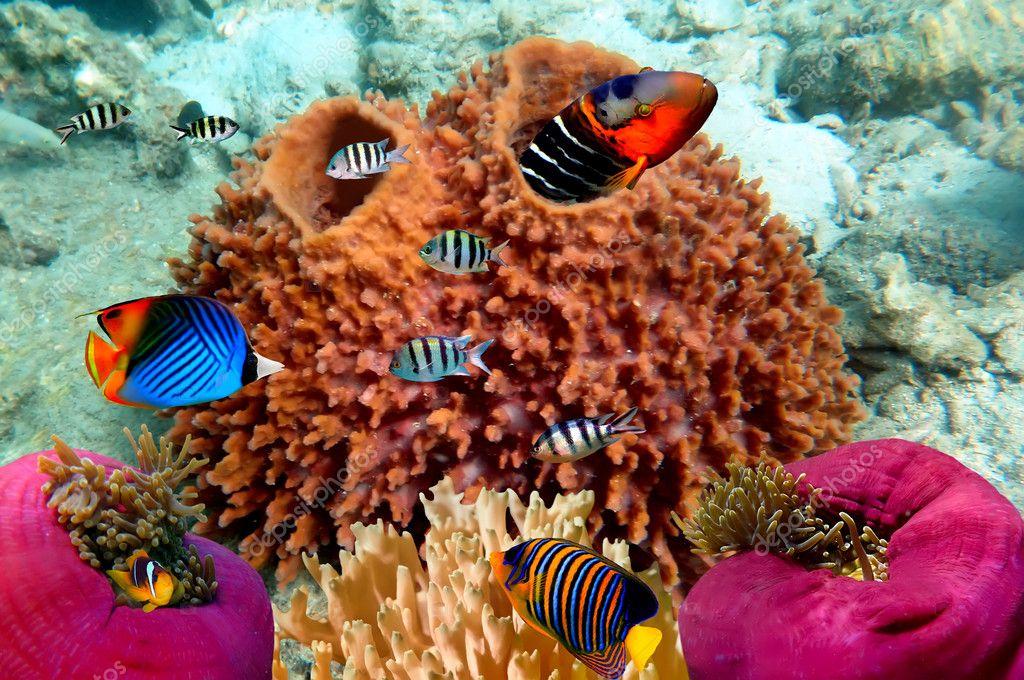 Фотообои Photo of a coral colony on a reef top