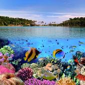 Fotografia fotografia di una colonia di corallo