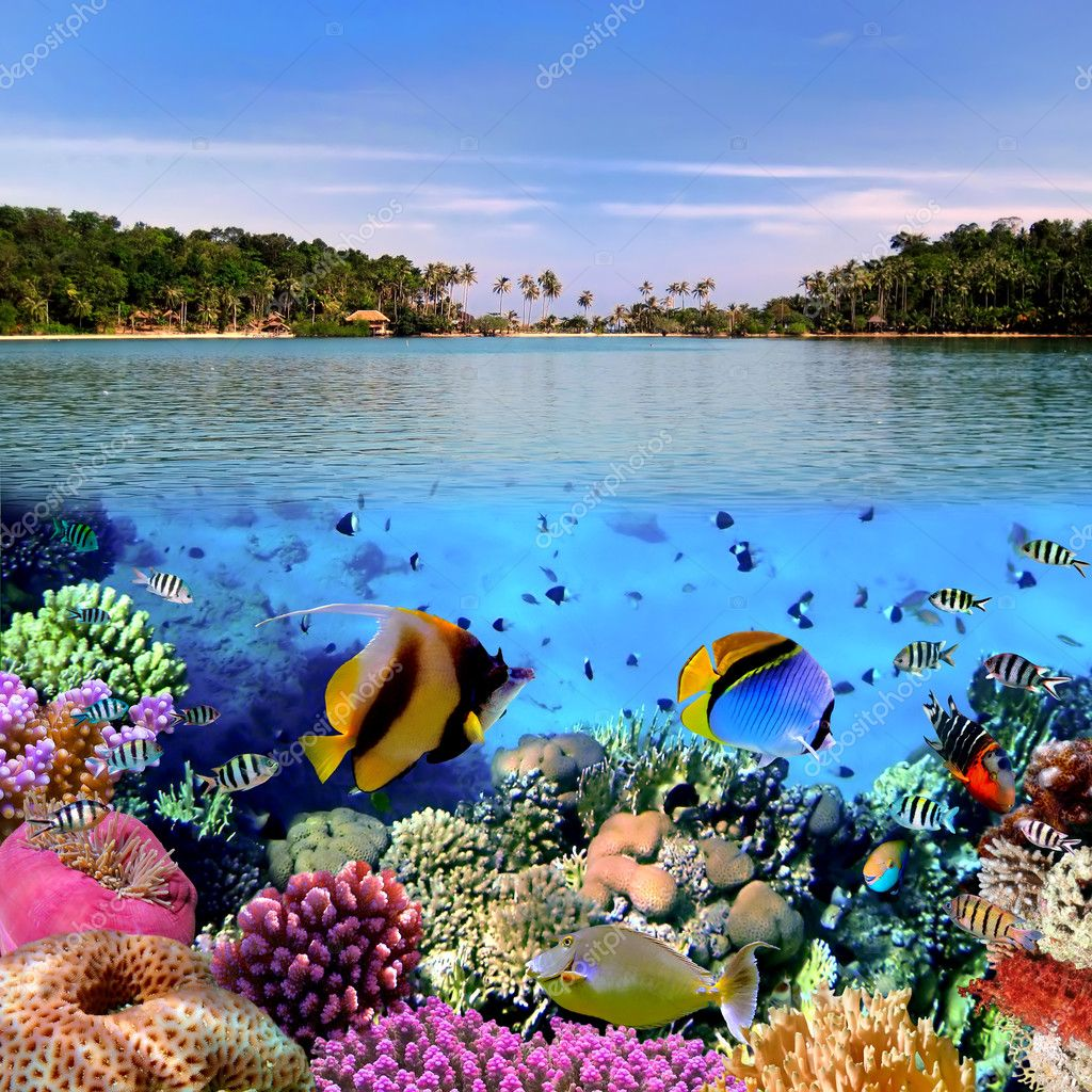 Фотообои Photo of a coral colony