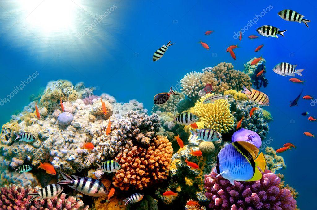 underwater painting plants -