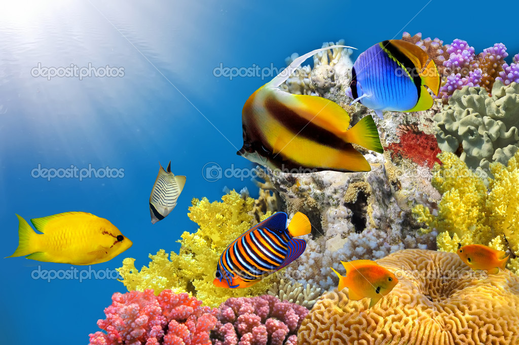 Фотообои Photo of a coral colony on a reef top