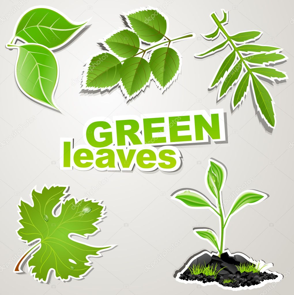 Vector set sticker: green leaves