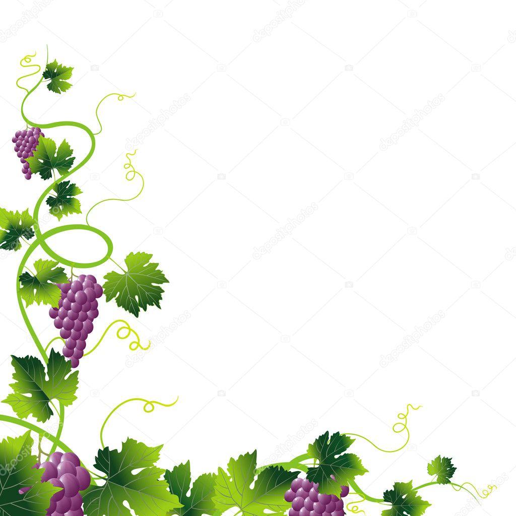Pink grapes corner