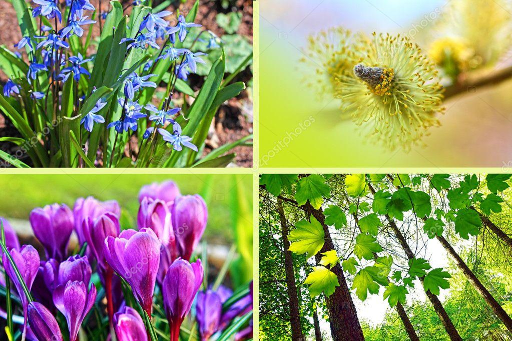 Spring Flowers Montage Horizontal Stock Photo C Julietart 6364671