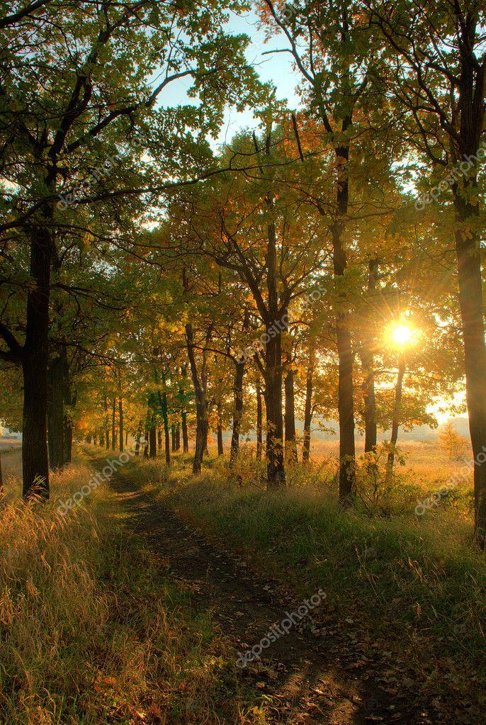Фотообои Forest path at sunset