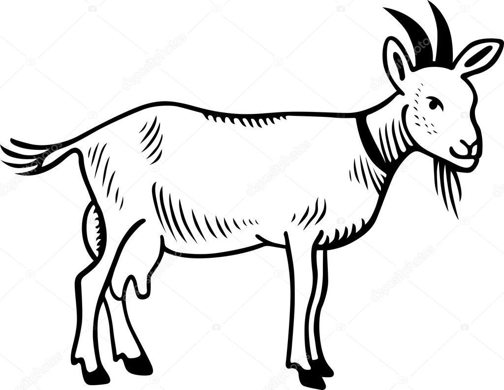 Goat domestic — Stock Vector © Den.Barbulat #6194749