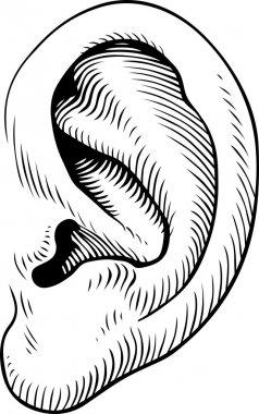 Ear of man